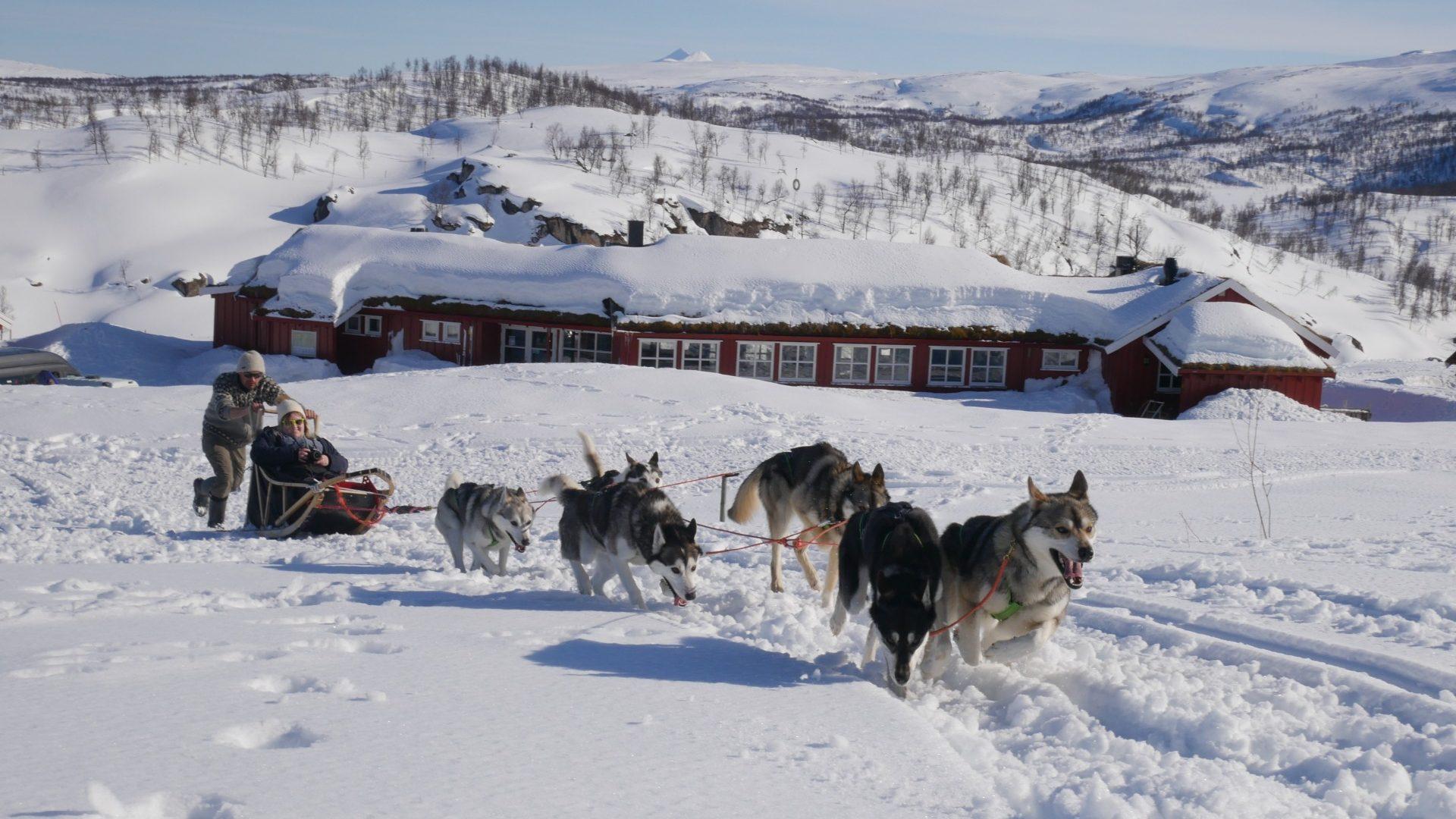 Hundekjøring med Saltenguidene